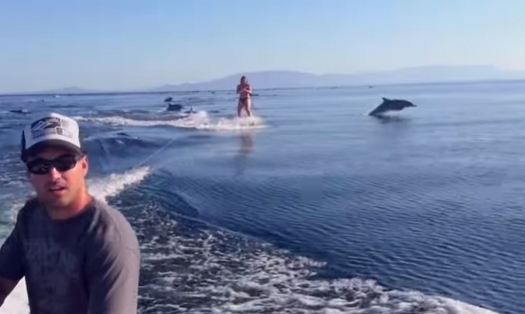 Channel 1: Woman Wakeboards With Dolphins